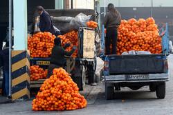 اصفہان میں شب یلدا کی آمد سے قبل بازار میں پھلوں کی فراہمی جاری