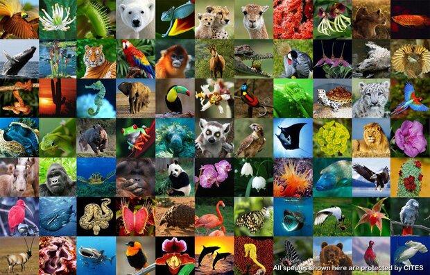 فراخوان جشنواره فیلم روز جهانی حیات وحش سال ۲۰۲۰