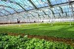 سالانه ۵۰هزار تن محصولات گلخانهای در آذربایجانشرقی تولید میشود
