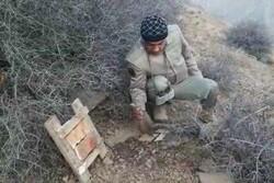 تخریب ۱۱ تله غیرمجاز زنده گیری کبک در منطقه حفاظت شده البرز مرکزی