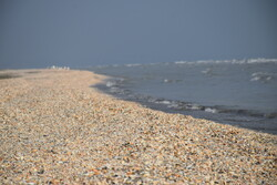 Astara beaches covered with seashells