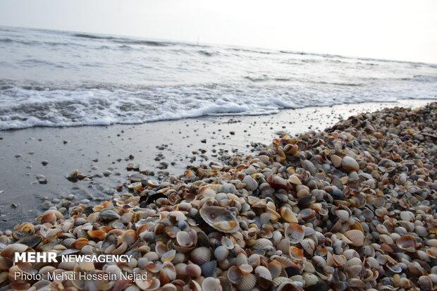 Astara beach covered with seashells