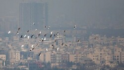 Air pollution choking Iranian cities, some 14,000 hospitalized