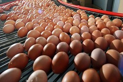 Iran exports 27,000 tons of egg to PG littoral states in 9 months: official