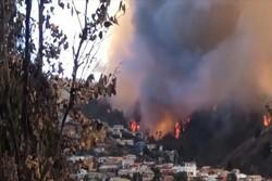 Şili'de orman yangını! Evler kül oldu