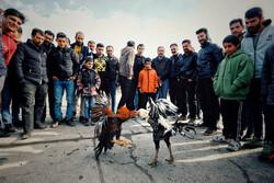 در حاشیه بازار پرنده فروشان همدان