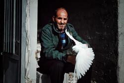 ہمدان میں پرندوں کی منڈی