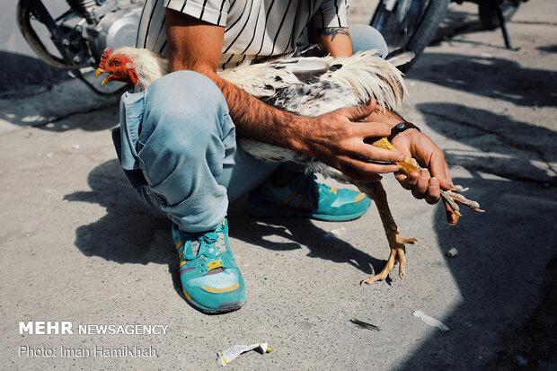 حاشیه بازار پرنده فروشان همدان