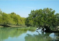 6,000 ha of mangrove forests in southern Iran undergo restoration