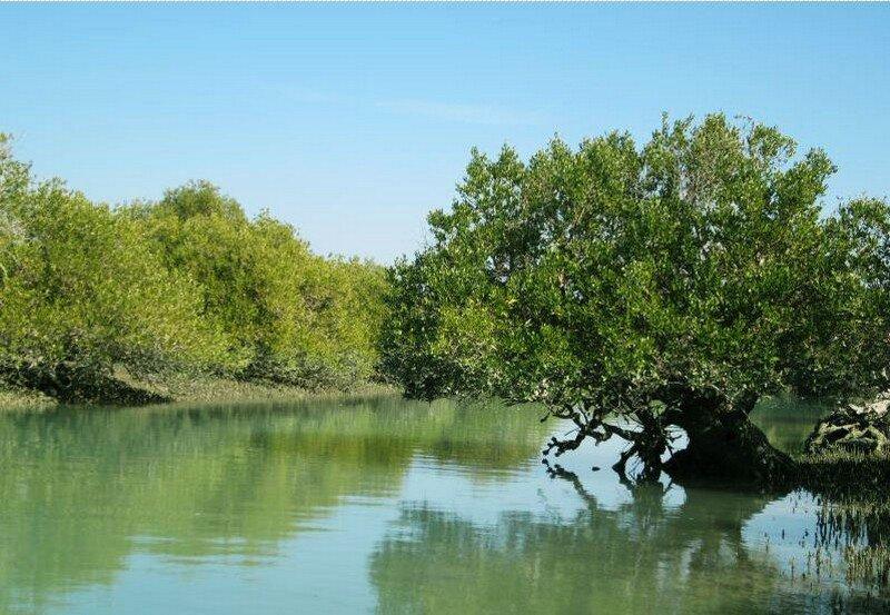 Iran Mangroves