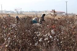 بیمه ۵۳۴ هزار هکتار از دیمزارها برای جهش تولید