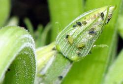 کشف گونهای جدید از حشرات توسط پژوهشگران ایرانی