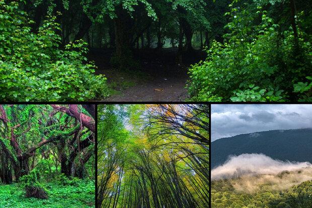 ساخت قلیان و قاشق بادرختان جنگل هیرکانی/ مصائب قدیمیترین جنگل