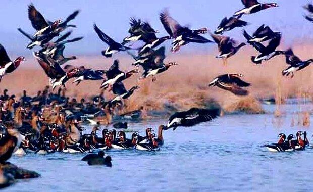 افزایش شمار پرندگان در کرمانشاه