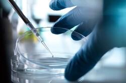 احتمال انسولین درمانی برای استفاده کنندگان از روش کمک باروری