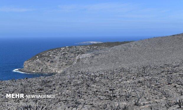آتش در جزیره کانگوروها