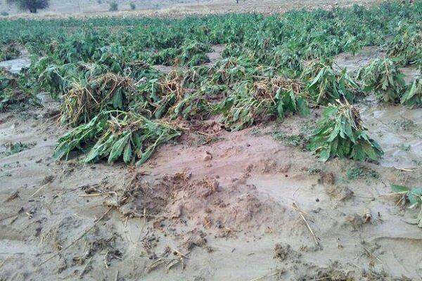 ابلاغ کمک بلاعوض ۵.۶ میلیاردی به کشاورزان خسارت دیده سیل گیلان