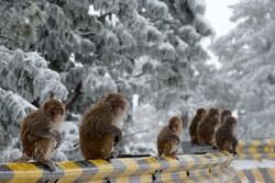 Vahşi doğadan seçilen haftanın muhteşem fotoğrafları