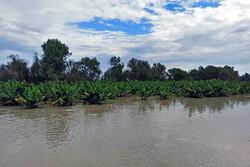 سیل ۶۰۰ هکتار از اراضی زراعی و باغی شهرستان بمپور را تخریب کرد