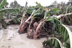 خسارت ۷۴۶ میلیاردی سیل به بخش کشاورزی سیستان و بلوچستان