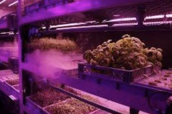 کشت گیاهان بدون خاک ممکن شد