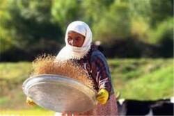 فعالیت ۹ صندوق اعتباری خرد زنان روستایی در اردبیل