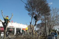 نگرانی مردم از نحوه هرس درختان در شاهرود/ جراحی یا بهبود وضعیت