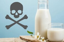 آلودگی شیر و لبنیات به سم آفلاتوکسین صحت ندارد