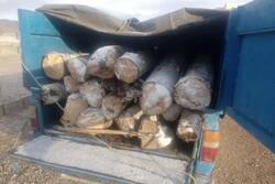 کشف و ضبط یک و نیم تُن چوب قاچاق در شهریار