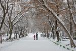 بارش مجدد برف از فردا/ دمای شهرکرد به منفی ۱۷ درجه می رسد
