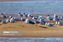 Migratory birds wing their way to southern coasts of Iran