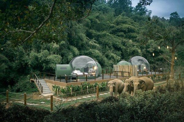 راه اندازی هتل جنگلی حبابی برای همنشینی با فیلها