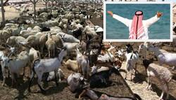 پاکستان سے عرب شہزادے کو تحفہ کے نام پر جانوروں کی ایکسپورٹ