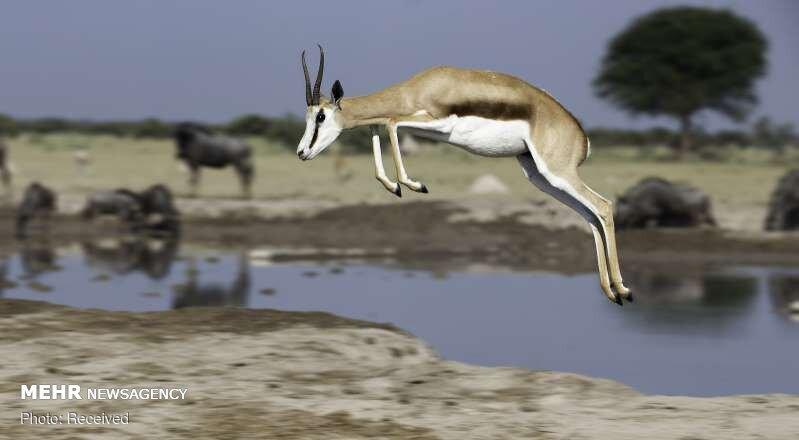 تصاویر جالب از حیوانات در حال حرکت