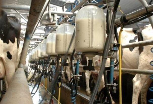 بررسی میزان آفلاتوکسین M۱ در شیر خام گاوداریها توسط پژوهشگران