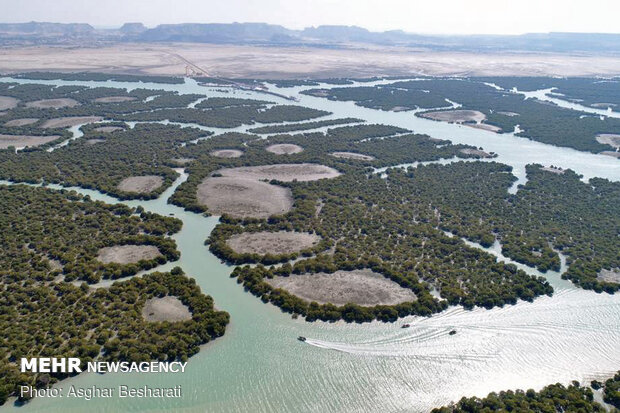 Breathtaking beauty of Qeshm's mangrove forest