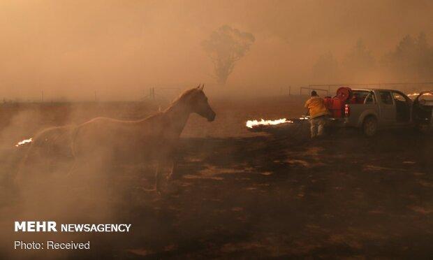 آتش سوزی به پایتخت استرالیا نزدیک شد