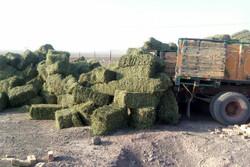 تولید سالانه ۶ هزار تن علوفه خشک در دهاقان