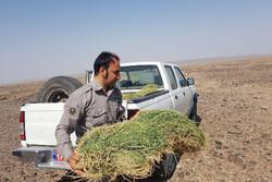 طرح جامع تأمین علوفه تدوین شد/سامانه ملی پیام رسانی کشاورزی سال ۹۹ رونمایی میشود