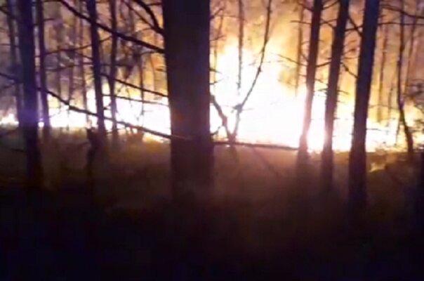 سازمان جنگلها مکلف به همکاری با وزارت دفاع برای مهار حریق شد