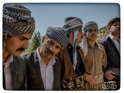 اکران «درخت گردو» در کردستان/ ۲ فیلم دیگر روی پرده میآیند