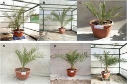 پرورش گیاه با دانههای ۲ هزار سال قبل