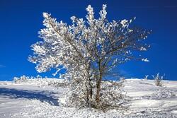Heavy snow blankets Bojnourd's nature
