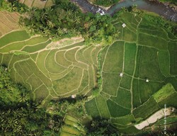 Asia-Pacific region needs better data to assure progress in agricultural systems: FAO