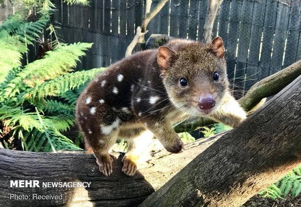 الحيوانات الناجية من حرائق أستراليا