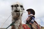 """مسابقة ركوب حيوان ال""""لاما"""" في الحديقة الوطنية بالإكوادور /صور"""