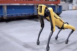 سگ رباتیک به دکل نفتی می رود