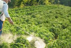سموم کشاورزی ایرانی صادر میشود