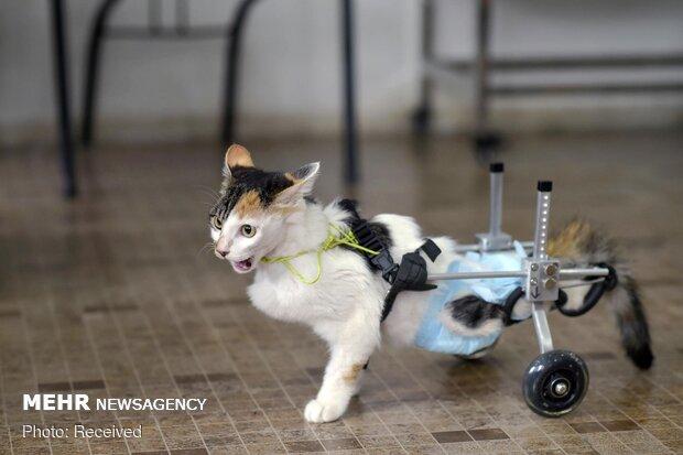 ساخت پای مصنوعی برای حیوانات
