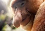 مختلف انواع القرود بالصور /صور